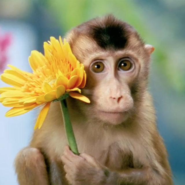 Tricky monkeys_bild_hemsidan